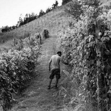 eventi banca del vino, degustazioni, Pollenzo